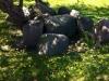 Großsteingrab in Rerik
