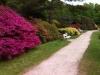 Rhododendron-Park in Graal-Müritz