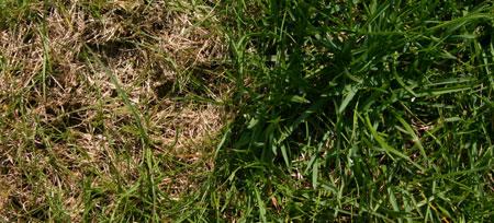 WM-Rasen