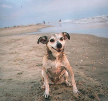 Der Star des Strandes