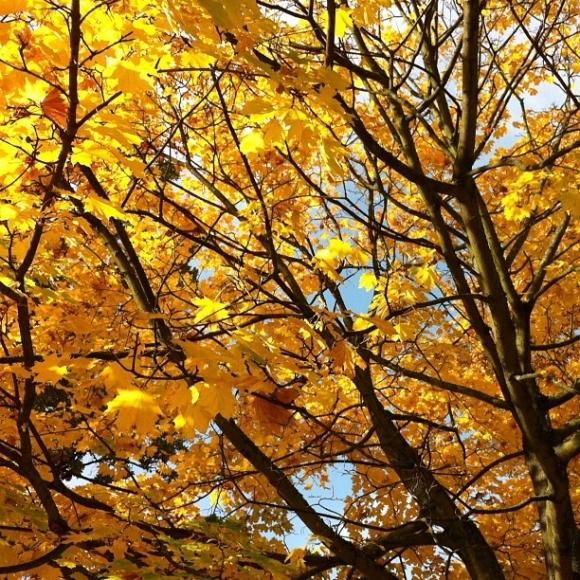 Aber sowas von Herbst