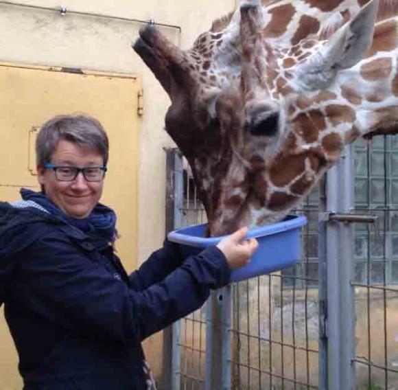 Hinter den Kulissen des Frankfurter Zoos: : Zwei Stunden helfen im Giraffenrevier.