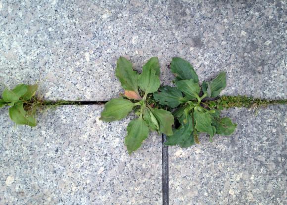 Überall kann was wachsen.