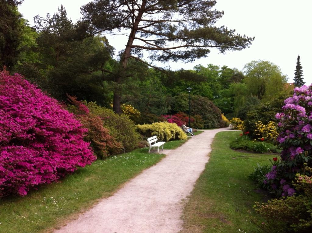 Rhododendron-Parkin Graal-Müritz